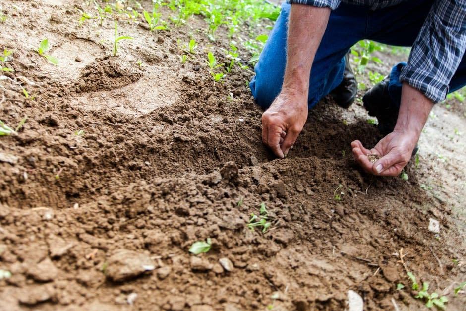 carnet oficial fitosanitarios