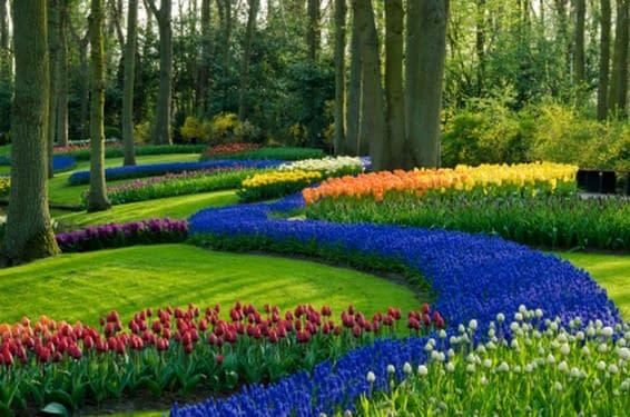 Cursos mantenimiento jardines