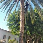 Poda-palmeras-2