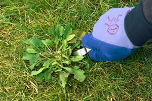 Eliminación de malas hierbas en césped